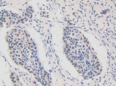 Immunohistochemistry (Formalin/PFA-fixed paraffin-embedded sections) - Anti-FAM19A3/TAFA3 antibody (ab231207)