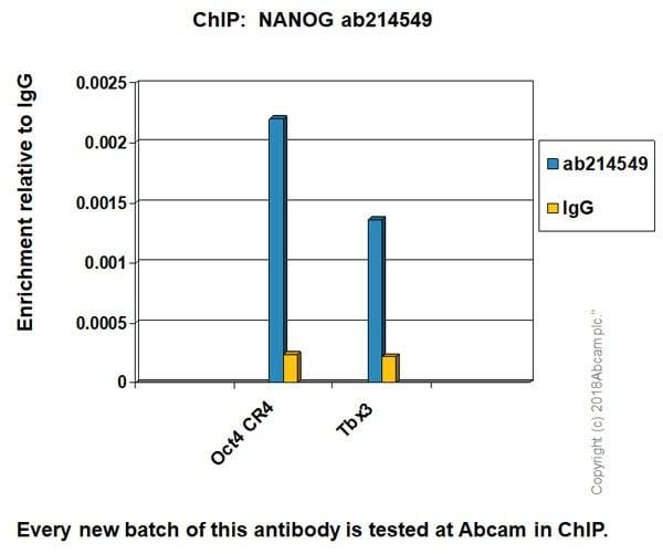 ChIP - Anti-Nanog antibody [EPR20694] - BSA and Azide free (ab231300)