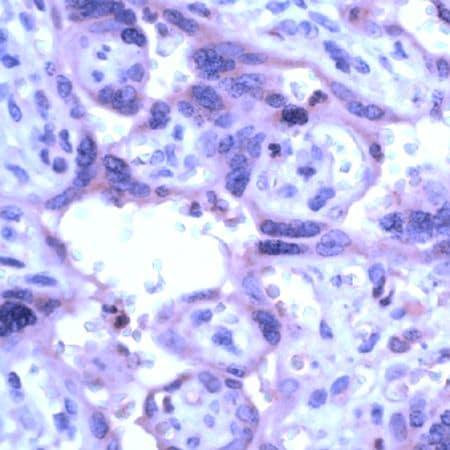 Immunohistochemistry (Formalin/PFA-fixed paraffin-embedded sections) - Anti-MMP19 antibody - N-terminal (ab231498)