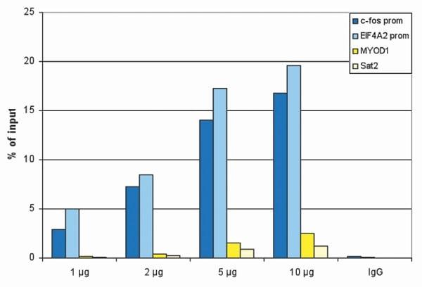 ChIP - Anti-Histone H3 (acetyl K18) antibody (ab231677)