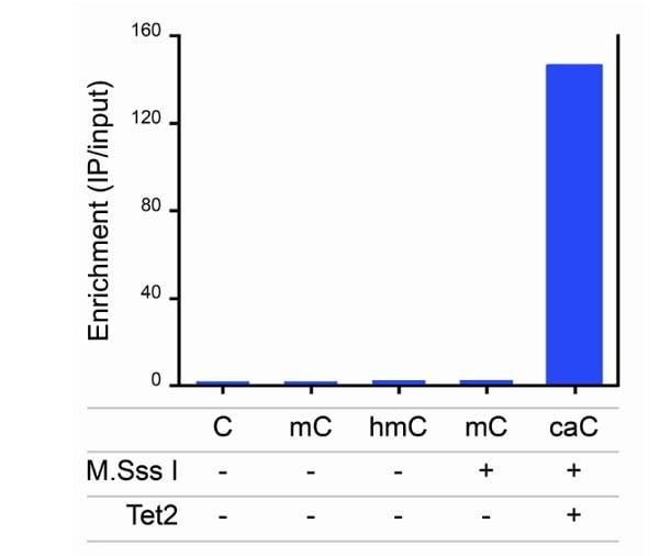Immunoprecipitation - Anti-5-carboxylcytosine (5-caC) antibody (ab231801)