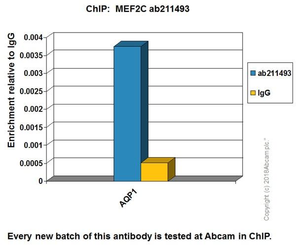 ChIP - Anti-MEF2C antibody [EPR19089-202] - BSA and Azide free (ab231859)