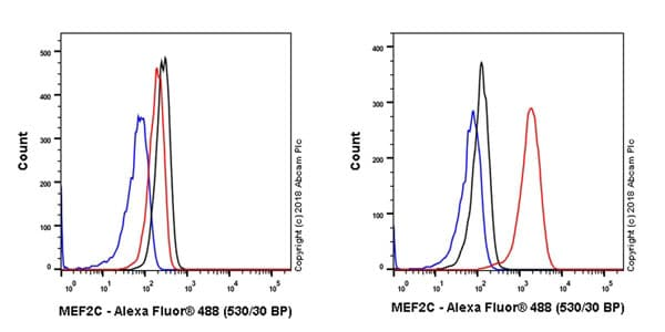 Flow Cytometry - Anti-MEF2C antibody [EPR19089-202] - BSA and Azide free (ab231859)