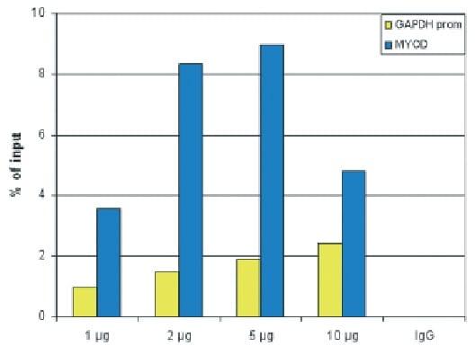 ChIP - Anti-Histone H2B antibody - C-terminal (ab231899)