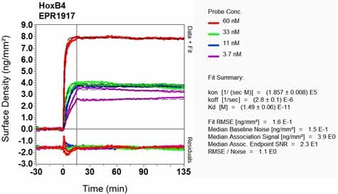 Other - Anti-HOXB4 antibody [EPR1917] - BSA and Azide free (ab232019)