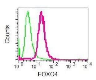 Flow Cytometry - Anti-FOXO4/AFX antibody [EPR5442] - BSA and Azide free (ab232029)