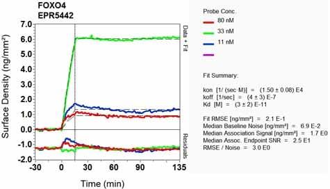 Other - Anti-FOXO4/AFX antibody [EPR5442] - BSA and Azide free (ab232029)