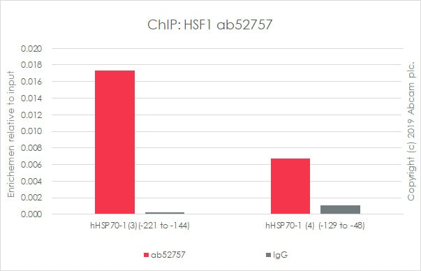 ChIP - Anti-HSF1 antibody [EP1710Y] - BSA and Azide free (ab232342)