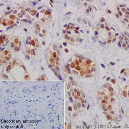 Immunohistochemistry (Formalin/PFA-fixed paraffin-embedded sections) - Anti-ATF5 antibody [EPR18286] - BSA and Azide free (ab232351)