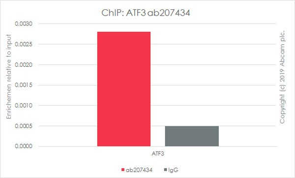 ChIP - Anti-ATF3 antibody [EPR19488] - BSA and Azide free (ab232375)