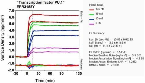 Other - Anti-PU.1/Spi1 antibody [EPR3158Y] - BSA and Azide free (ab232383)