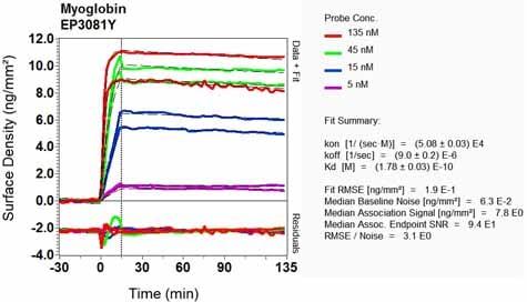Other - Anti-Myoglobin antibody [EP3081Y] - BSA and Azide free (ab232388)