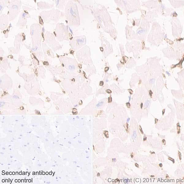 Immunohistochemistry (Formalin/PFA-fixed paraffin-embedded sections) - Anti-Aquaporin 1 antibody [EPR20325] - BSA and Azide free (ab232399)