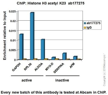 ChIP - Anti-Histone H3 (acetyl K23) antibody [EPR17712] - BSA and Azide free (ab232434)