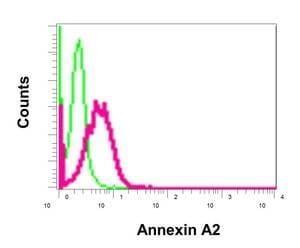Flow Cytometry - Anti-Annexin-2/ANXA2 antibody [EPR13052(B)] - BSA and Azide free (ab232476)