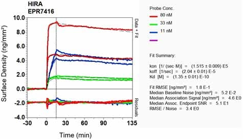 Other - Anti-HIRA/HIR antibody [EPR7416] - BSA and Azide free (ab232477)