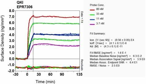 Other - Anti-QKI antibody [EPR7306] - BSA and Azide free (ab232502)