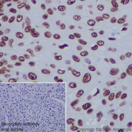Immunohistochemistry (Formalin/PFA-fixed paraffin-embedded sections) - Anti-Histone H4 (acetyl K5) antibody [EP1000Y] - BSA and Azide free (ab232507)