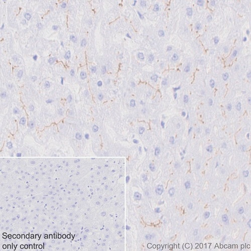 Immunohistochemistry (Formalin/PFA-fixed paraffin-embedded sections) - Anti-BCRP/ABCG2 antibody [EPR20080] - BSA and Azide free (ab232517)