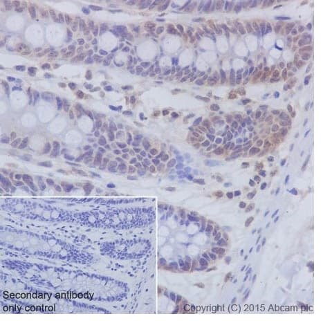 Immunohistochemistry (Formalin/PFA-fixed paraffin-embedded sections) - Anti-PKC beta 1 antibody [EPR18512] - BSA and Azide free (ab232518)