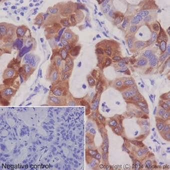 Immunohistochemistry (Formalin/PFA-fixed paraffin-embedded sections) - Anti-FDFT1 antibody [EPR16481] - BSA and Azide free (ab232552)