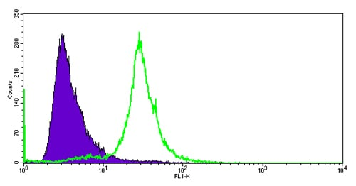 Flow Cytometry - Anti-Cdc25C antibody [E302] - BSA and Azide free (ab232553)