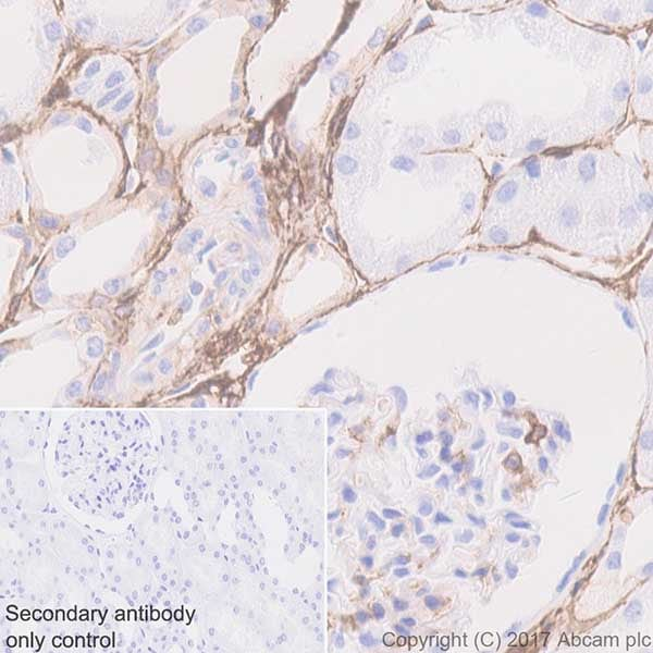 Immunohistochemistry (Formalin/PFA-fixed paraffin-embedded sections) - Anti-CD44 antibody [EPR18668] - BSA and Azide free (ab232556)
