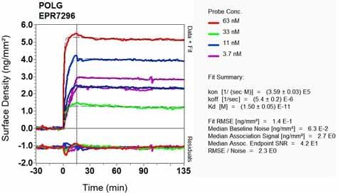 Other - Anti-POLG antibody [EPR7296] - BSA and Azide free (ab232583)