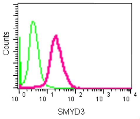 Flow Cytometry - Anti-SMYD3 antibody [EPR11107(2)] - BSA and Azide free (ab232626)