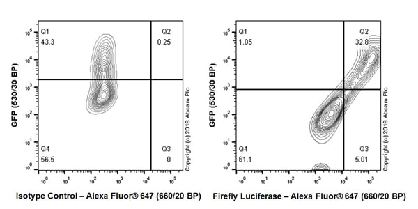 Flow Cytometry - Anti-Firefly Luciferase antibody [EPR17790] - BSA and Azide free (ab232629)