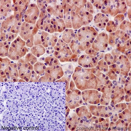 Immunohistochemistry (Formalin/PFA-fixed paraffin-embedded sections) - Anti-Mov10 antibody [EPR14478] - BSA and Azide free (ab232641)