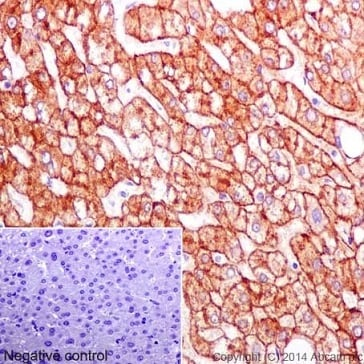 Immunohistochemistry (Formalin/PFA-fixed paraffin-embedded sections) - Anti-ASGR2 antibody [EPR16974] - BSA and Azide free (ab232664)