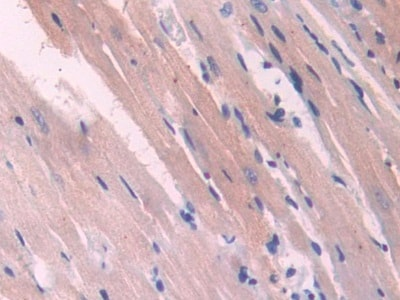 Immunohistochemistry (Formalin/PFA-fixed paraffin-embedded sections) - Anti-NOSTRIN antibody (ab232751)