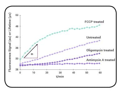 Signal Profiles of HepG2 oxygen consumption obtained using the Mitochondrial Stress Test Complete Assay.