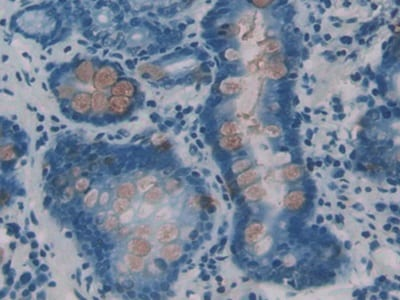 Immunohistochemistry (Formalin/PFA-fixed paraffin-embedded sections) - Anti-ITLN1 antibody (ab232885)