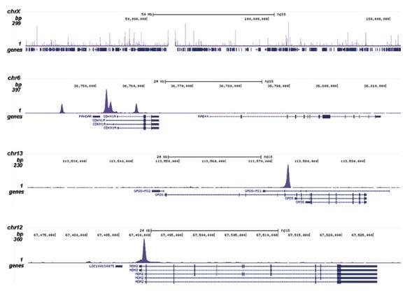 CHIPseq - Anti-p53 antibody (ab232930)