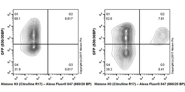 Flow Cytometry - Anti-Histone H3 (citrulline R17) antibody [EPR20358-120] - BSA and Azide free (ab232938)