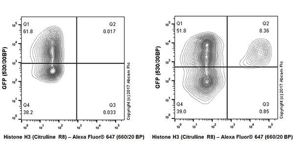 Flow Cytometry - Anti-Histone H3 (citrulline R8) antibody [EPR20358-13] - BSA and Azide free (ab232939)