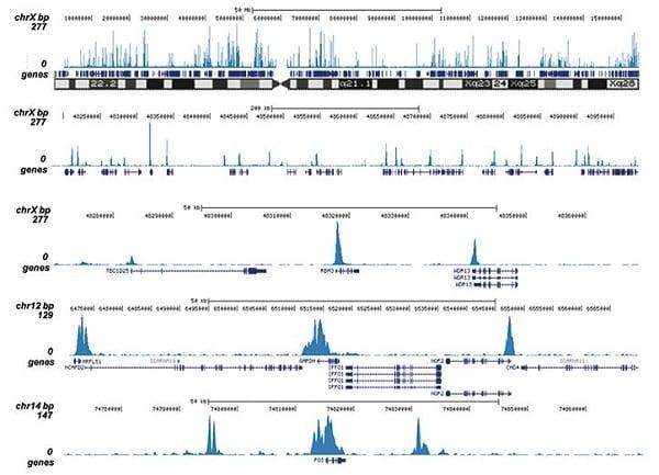 CHIPseq - Anti-Histone H3 (acetyl K9 + K14) antibody (ab232952)