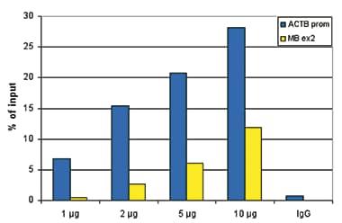 ChIP - Anti-Histone H3 (acetyl K9 + K14) antibody (ab232952)