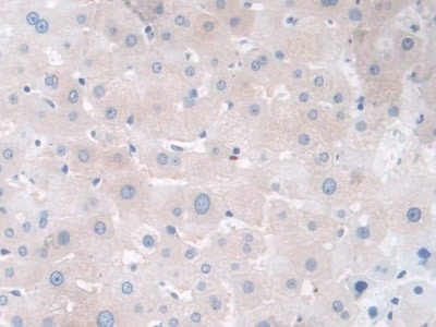 Immunohistochemistry (Formalin/PFA-fixed paraffin-embedded sections) - Anti-GALC antibody (ab232972)