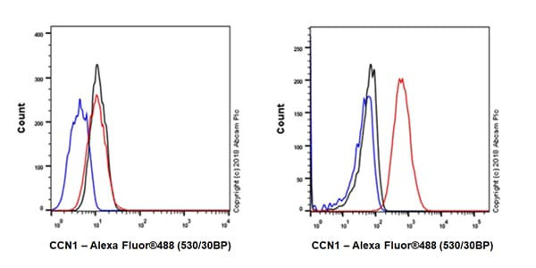 Flow Cytometry - Anti-CYR61/CCN1 antibody [EPR20681] - BSA and Azide free (ab233097)