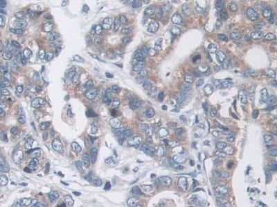 Immunohistochemistry (Formalin/PFA-fixed paraffin-embedded sections) - Anti-MARC1 antibody (ab233111)