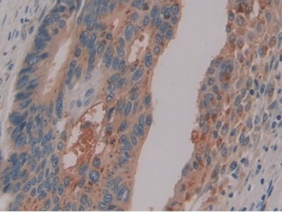 Immunohistochemistry (Formalin/PFA-fixed paraffin-embedded sections) - Anti-PSG1 antibody (ab233130)