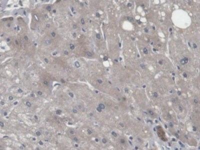 Immunohistochemistry (Formalin/PFA-fixed paraffin-embedded sections) - Anti-CNPY2/MSAP antibody (ab233136)
