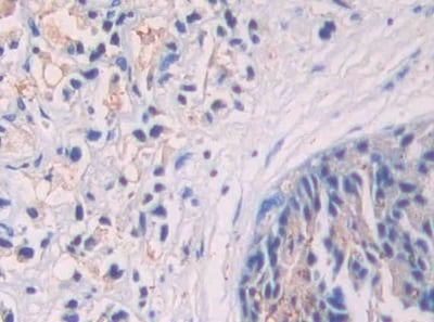 Immunohistochemistry (Formalin/PFA-fixed paraffin-embedded sections) - Anti-SIGIRR antibody (ab233146)