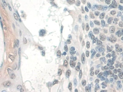 Immunohistochemistry (Formalin/PFA-fixed paraffin-embedded sections) - Anti-COQ6 antibody (ab233168)