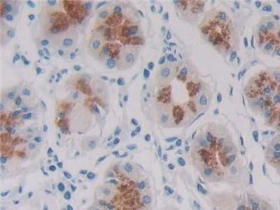 Immunohistochemistry (Formalin/PFA-fixed paraffin-embedded sections) - Anti-REG1B antibody (ab233210)