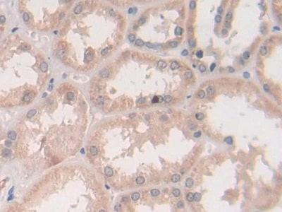 Immunohistochemistry (Formalin/PFA-fixed paraffin-embedded sections) - Anti-Syntaxin 2/STX2 antibody (ab233275)