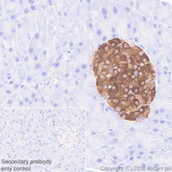 Immunohistochemistry (Formalin/PFA-fixed paraffin-embedded sections) - Anti-PC1/3 antibody [EPR21908] - BSA and Azide free (ab233397)
